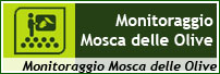 MOSCA OLIVE